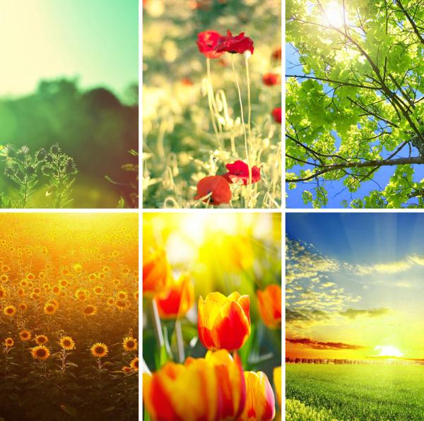 Палитра цветотипа теплая весна