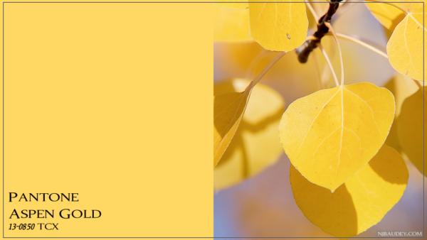Aspen Gold Золотая осина