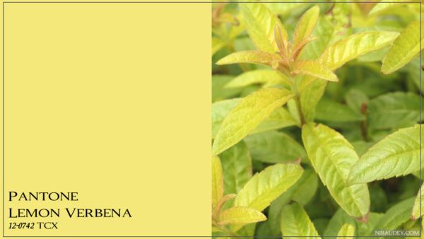 Lemon Verbena Лимонная вербена
