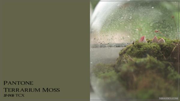 Terrarium Moss Мох в террариуме