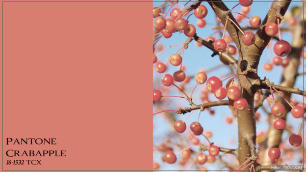 Crabapple Дикое яблоко