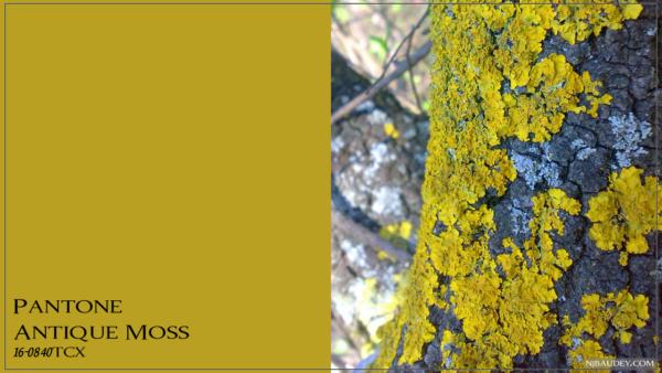 Antique Moss Античный мох