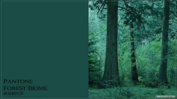 Forest Biome Лесной биом