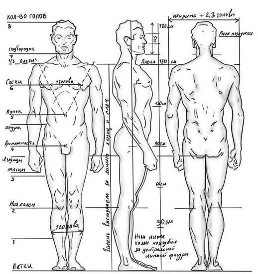 определение типа и особенностей телосложения