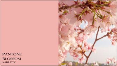 PANTONE 14-1513 Blossom Цветение