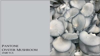 PANTONE 13-4201 Oyster Mushroom Вешенка