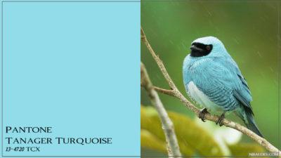 PANTONE 13-4720 Tanager Turquoise Бирюзовая танагра