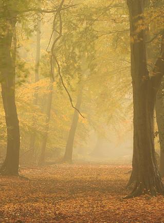 мягкая осень