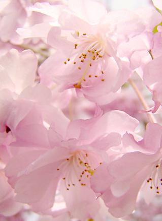 светлая весна