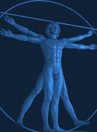 телосложения и пропорции