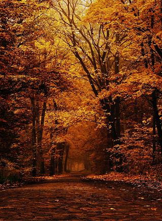 темная осень глубокая осень
