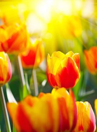 теплая весна истинная весна