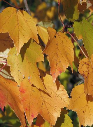 теплая осень истинная осень