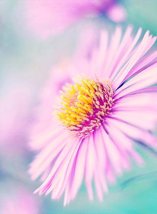 оттенки цветотипов в природе