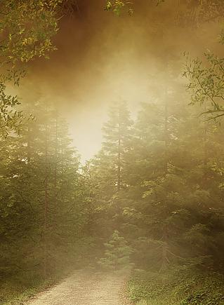 цвета мягкой осени в природе