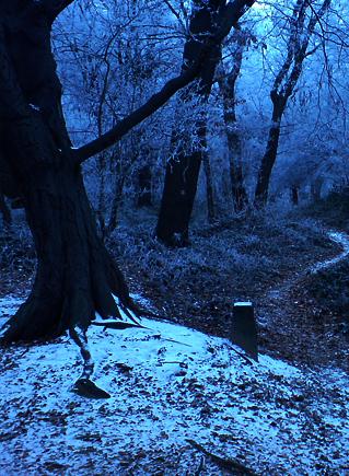 цвета темной зимы в природе