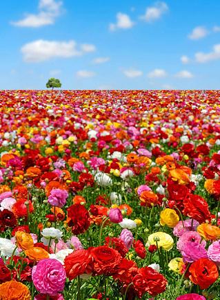 яркая весна чистая весна