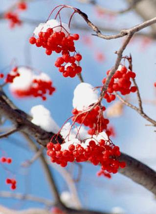 чистая зима яркая зима